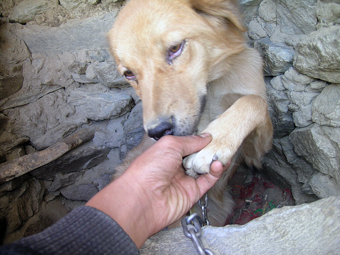 dog in zanskar