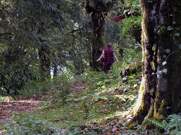 monk in the forests of Sikkim