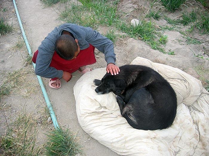 Dog in Nyerma