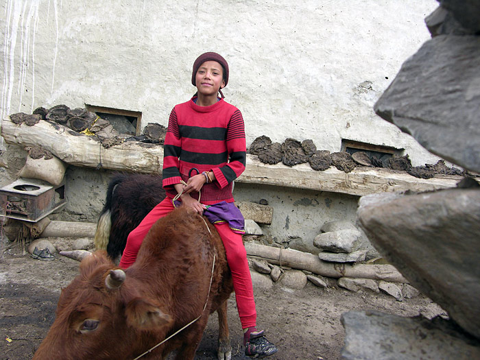 riding on a cow in Zanskar