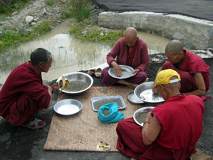 nuns sorting out peas in ladakh