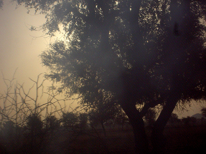 vegetation in Rajasthan