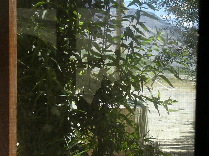 plant in zanskar