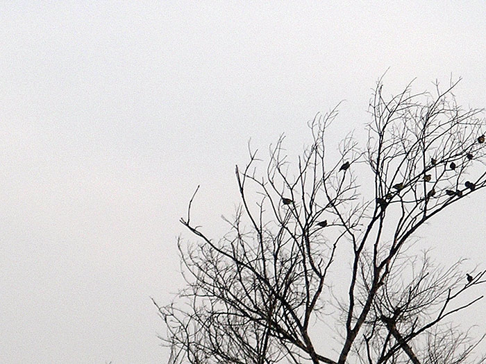 birds in a tree in Kerala