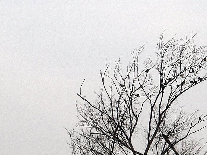 birds in a tree in Kerala