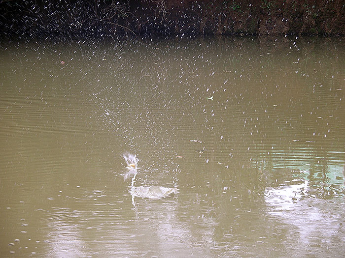 drops in a river in Kerala