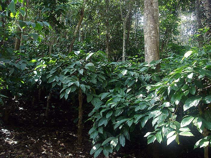 plants in Kerala