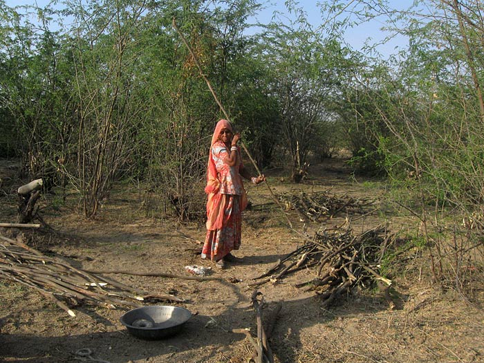woman with wood in Rajasthan
