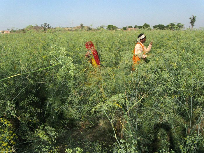 fieldwork in Rajasthan