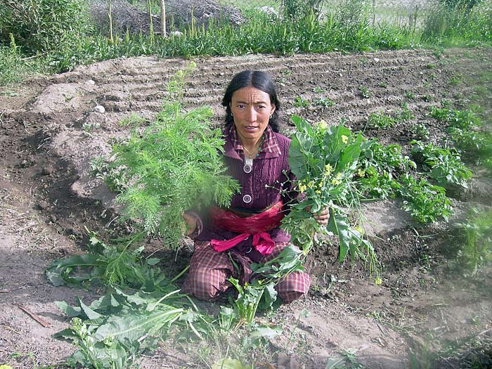 woman with vegetable from the kitchen garden in Zanskar
