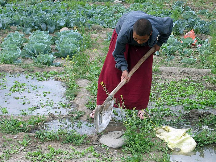nun working in the garden in Ladakh