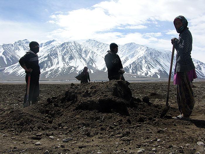 manure in Zanskar